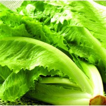 【臻美蔬果】蘿美生菜