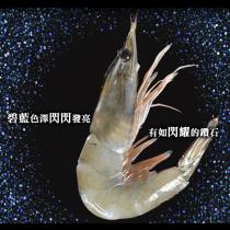 【臻美蔬果】頂級藍鑽蝦