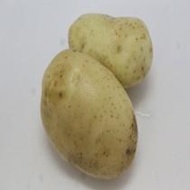 【臻美蔬果】馬鈴薯