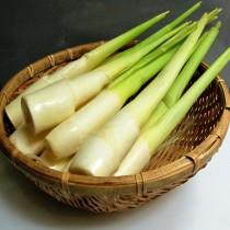 【臻美蔬果】皎白筍