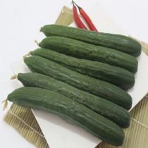 【臻美蔬果】小黃瓜