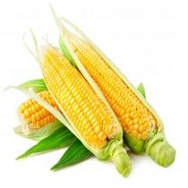 【臻美蔬果】甜玉米